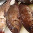 昆布森「真さば(ルイベ)」・紋別「真ふぐ」・羽幌「天然ひらめ」・長崎「真鯛」!!発寒かねしげ鮮魚店です。