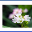 小さくてキュートなお花