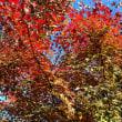 深大寺へ紅葉を見にいく!