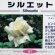 薔薇の園  * 2018 *  Vol.1 * シルエット *