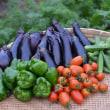 菜園では、いろんな夏野菜が順調に・・・