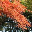 紅葉:井頭公園