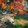 秋の風物詩(紅葉)