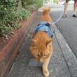 朝の猫散歩