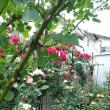2018春バラの花後の処理作業(第一回目)