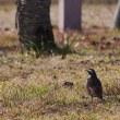 農業公園の鳥達