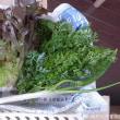 ジャガイモ収穫 <我が家の菜園146>
