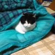 ネコは寝袋で丸くなる~!