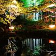 『ライトアップ』 竹林