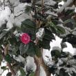 真冬、花は寂しいほどに少ない