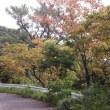 9月26日ショチョガマ、平瀬まんかい稲作儀礼
