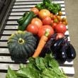 週末農業、収穫した野菜を料理して家族で食べた
