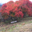 紅葉狩りトレイル