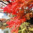 東京都の大塚駅から小石川後楽園を紅葉見ハイキング