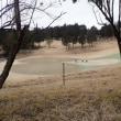 鹿の親子のゴルフ三昧