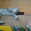 あっちこっちに猫