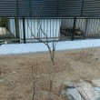 庭木などの移植2017年12月