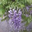 春「いろはの花図鑑」