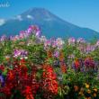 山梨県側夏終盤の富士山