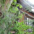 折り鶴欄&トウチクラン