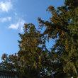 廣田八幡神社を初詣で訪ねる2(香川の神社16-5)