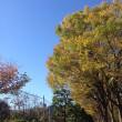 11月16日(木)のつぶやき