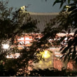 🚶♀️♾白虹橋  🌉👫…平等院界隈181118