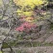 紅葉(大山)