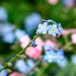 19/Apr  最近の花鳥風月
