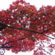 紅葉も大好き