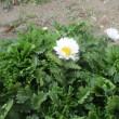 昼餉&街角の花
