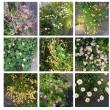 花を見ながら歩きました。