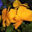 暖かい催花雨(さいかう)落ちて開花待つ・日曜は静かに雨を共にして