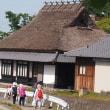 古代米のバケツ稲栽培体験  ~「はたっこバス」5月のイベント~