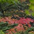 雨の日光でカメラ教室(竜頭の滝と紅葉)