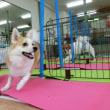 12月の【ALOHA塾】チョークアートぷちレッスン♪  犬のしつけ教室@アロハドギー