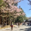 Today was also another perfect day for Hanami in Maruyama Park ♪