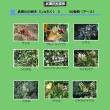 武庫川大探検 植物樹木編3