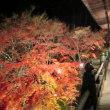 播州清水寺-秘仏と大刀、紅葉、明石海峡大橋