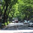 福岡市中央区のけやき通り・・・私の散歩道の一部