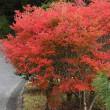16日の散歩 ( 妙蓮寺から堀川通り、船岡山と十二坊からの秋だより )