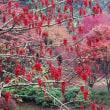 人吉ループ橋の紅葉