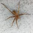■【閲覧注意】クモ