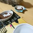 ニャッと食事の風景