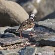 今日の鳥コレクション・・・海辺の公園で