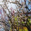 春を待つ 2
