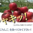 雪んこりんご
