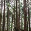 モネの池と蕪山の株杉