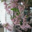 阿賀野市 「結桜」 改定版