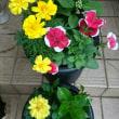 花が増えました❗